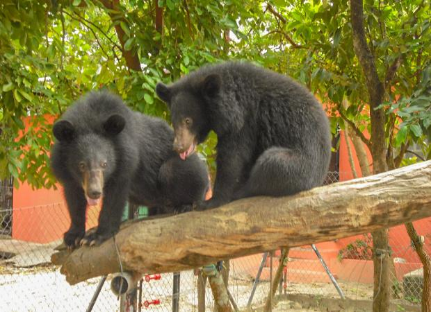Phnom Tamao Wildlife Rescue Centre Full Day Tour